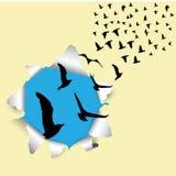 Pájaros de vuelo fuera del ejemplo del vector de la caja Fotos de archivo libres de regalías