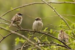Pájaros del paraíso. Foto de archivo