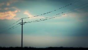 Pájaros en los alambres almacen de metraje de vídeo