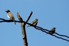 Pájaros en un alambre Foto de archivo libre de regalías