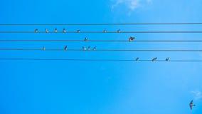 Pájaros que cantan y que forman tono de la música en líneas eléctricas en Sithonia Fotos de archivo