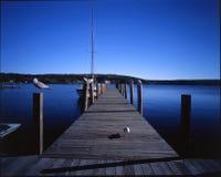 Pájaros que esperan en la línea, de New Hampshire Imagen de archivo