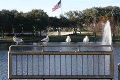 Pájaros que pasan por alto el lago Imágenes de archivo libres de regalías