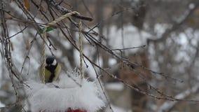 Pájaros que picotean las semillas en el invierno fuera de un sombrero de Santa Claus almacen de video