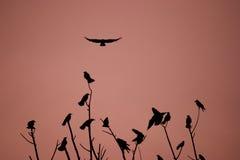 Pájaros que vuelan y encaramados   Foto de archivo libre de regalías