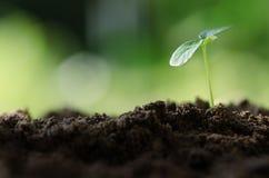 Plántula que crece sobre el ambiente verde Foto de archivo