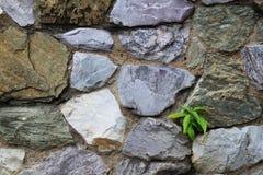 Plántula y piedra Imagenes de archivo