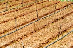 Plántulas que crecen en los abastecimientos orgánicos de la granja y de agua Foto de archivo