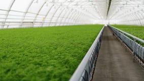 Plántulas que crecen en una planta muy grande Fotografía de archivo