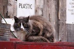 Plástico Foto de Stock