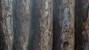 Plástico brillante rugoso con el fondo de madera oscuro del modelo de los registros Imagenes de archivo
