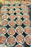 Plástico do Jardiniere Foto de Stock Royalty Free