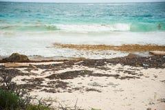 Plástico do oceano na costa fotografia de stock royalty free