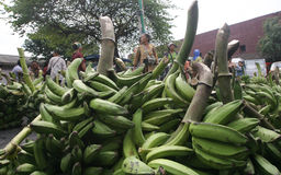 Plátano Fotos de archivo libres de regalías