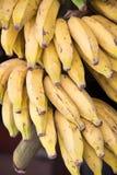 Plátano foto de archivo
