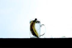Plátano como el agua a clearring su vivo Fotos de archivo libres de regalías