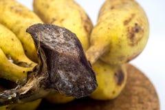 Plátano con el molde u hongos en el fondo blanco Fotografía de archivo libre de regalías