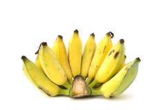 Plátano cultivado Imagen de archivo libre de regalías