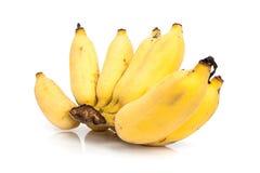 Plátano cultivado Fotos de archivo libres de regalías
