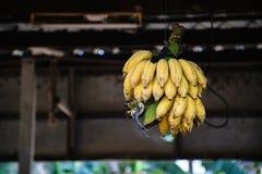 Plátano cultivado Foto de archivo