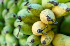 Plátano del awak de Pisang fotos de archivo libres de regalías
