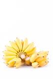 Plátano del huevo y mano amarillos de plátanos de oro maduros en la comida sana de la fruta de Pisang Mas Banana del fondo blanco Fotos de archivo libres de regalías