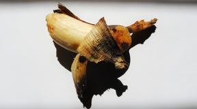 Plátano demasiado maduro y pelado en fondo aislado o blanco Imágenes de archivo libres de regalías