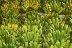 Plátano fresco fotos de archivo