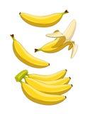 Plátano Fruta tropical Imágenes de archivo libres de regalías