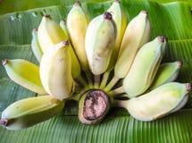 Plátano maduro en la hoja del plátano Imagen de archivo libre de regalías