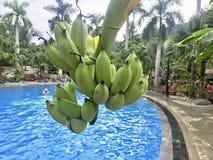 Plátano sobre la piscina imagen de archivo libre de regalías