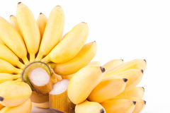 Plátano y mano maduros de plátanos de oro en la comida sana de la fruta de Pisang Mas Banana del fondo blanco aislada Imágenes de archivo libres de regalías