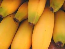 Plátanos Fotos de archivo libres de regalías
