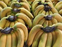 Plátanos amarillos cultivados maduros Fotografía de archivo