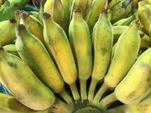 Plátanos amarillos cultivados maduros Fotos de archivo