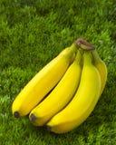 Plátanos en la hierba Imagenes de archivo
