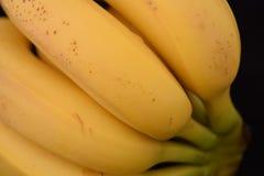 Plátanos en un fondo blanco del estudio Foto de archivo libre de regalías