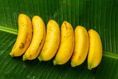Plátanos frescos en las hojas verdes del plátano, visión superior imagen de archivo libre de regalías