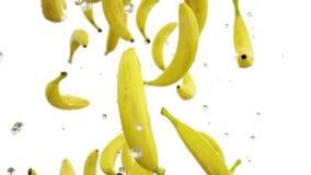 Plátanos frescos que caen con descensos del agua Cámara lenta Animación realista Aislante con el canal alfa almacen de metraje de vídeo