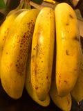 Plátanos maduros Imagenes de archivo