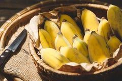 Plátanos maduros frescos Imágenes de archivo libres de regalías