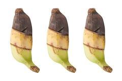 3 plátanos prueban la diferencia Aislado en blanco Imagenes de archivo