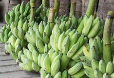 Plátanos que cosechan al mercado en cierre para arriba Fotografía de archivo