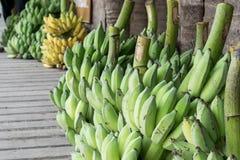 Plátanos que cosechan de granja para comercializar en cierre para arriba Imagen de archivo