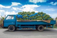Plátanos que llevan de un camión azul imagen de archivo libre de regalías