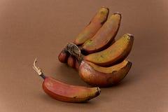 Plátanos rojos Foto de archivo libre de regalías