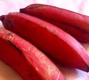 Plátanos rojos Foto de archivo