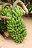 Plátanos verdes Fotografía de archivo