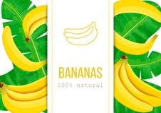 Plátanos y hojas de palma maduros con el texto el 100 por ciento de natural Etiqueta de la raya vertical Ejemplo del vector con a Foto de archivo libre de regalías