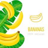 Plátanos y hojas de palma maduros con el texto el 100 por ciento de natural Etiqueta de la raya vertical Espacio libre Imagenes de archivo